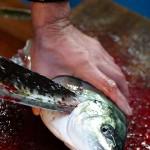Tsukiji shijo • Fish Market - Tokyo - Japan